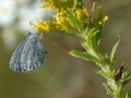 Gallery-Butterflies-002