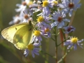 Gallery-Butterflies-003