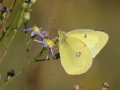 Gallery-Butterflies-004