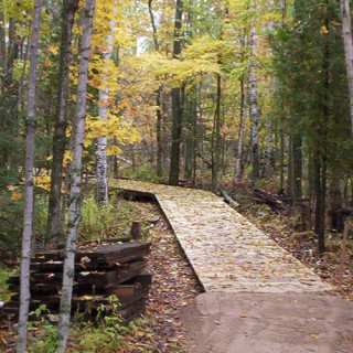 A wooden walkway through trees