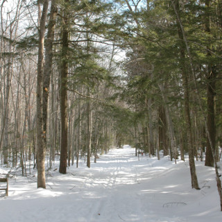 A snowy path through trees